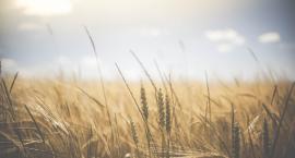 Rolnicy otrzymają zwrot akcyzy