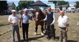 Najpiękniejszy koń z wystawy w Nowodworze stracił życie