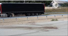 Niebezpiecznie na S17. Łosie na drodze