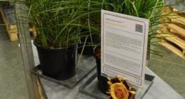 Trawa z Ryk doceniona na międzynarodowej wystawie