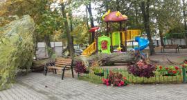 Ryki - drzewo runęło na plac zabaw