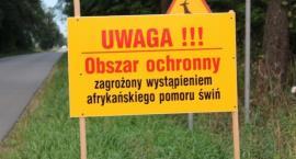 Wirus ASF w Długowoli. Przeciwciała u zastrzelonego dzika