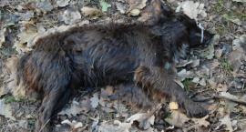Znalazła w lesie martwego psa