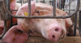 Czy jedzenie mięsa może powodować raka? Zobacz szokujące wideo