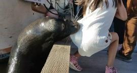Lew morski zaatakował dziewczynkę i wciągnął ją do wody! Zobacz szokujące nagranie