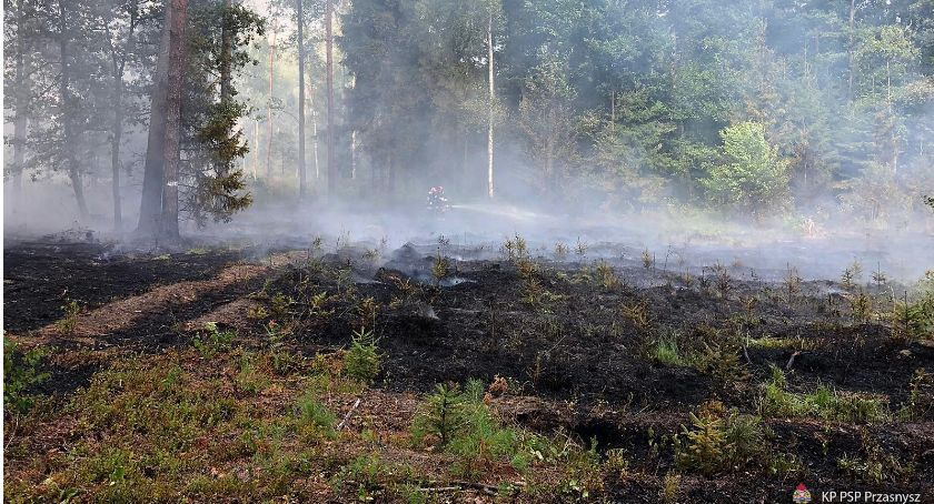 Pożary - Straż , Kolejny pożar poszycia leśnego gminie Chorzele - zdjęcie, fotografia