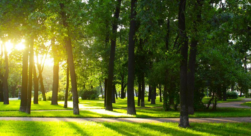 Starosta i Powiat, Radni miejscy chcą porozumienia powiatem stworzenia parku - zdjęcie, fotografia