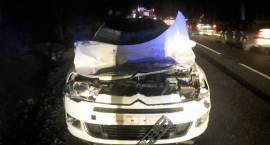 Zderzenie samochodu osobowego z łosiem w Chorzelach