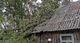Chorzele. Przewracające się drzewo uszkodziło budynek mieszkalny