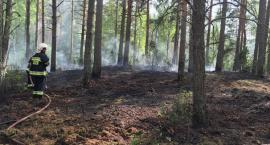 Kolejny pożar lasu w gminie Chorzele. Spłonęło 16 arów w miejscowości Kwiatkowo