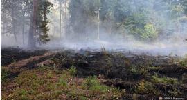 Kolejny pożar poszycia leśnego w gminie Chorzele