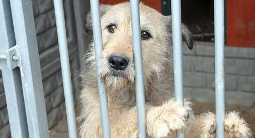 Akcje społeczne i charytatywne, Świąteczna animalpsiaka włącz akcji pomóż zwierzakom schroniska Kościerzynie - zdjęcie, fotografia
