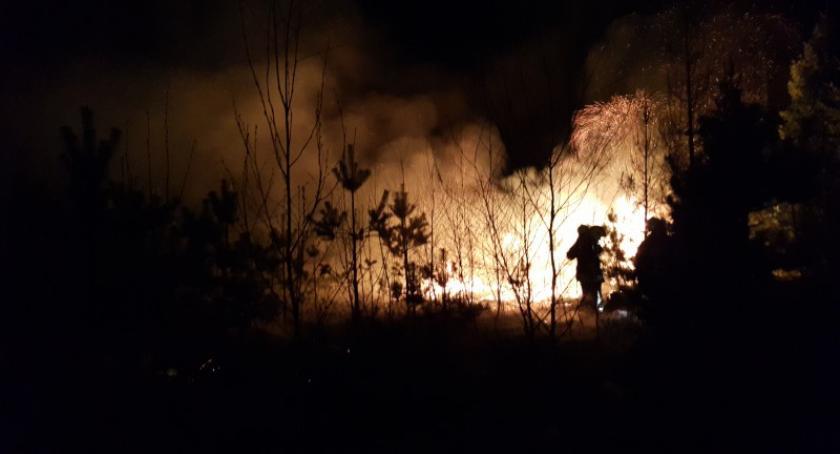 Leśnictwo i łowiectwo, Leśnicy apelują ostrożność coraz więcej pożarów lasów - zdjęcie, fotografia