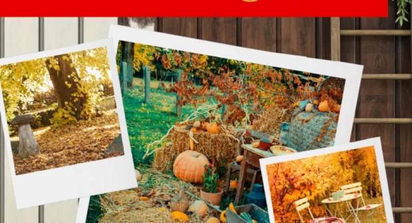 Styl życia, Miejsce ogrodzie które chciałbym odmienić pomocą narzędzi Garten! udział konkursie! - zdjęcie, fotografia