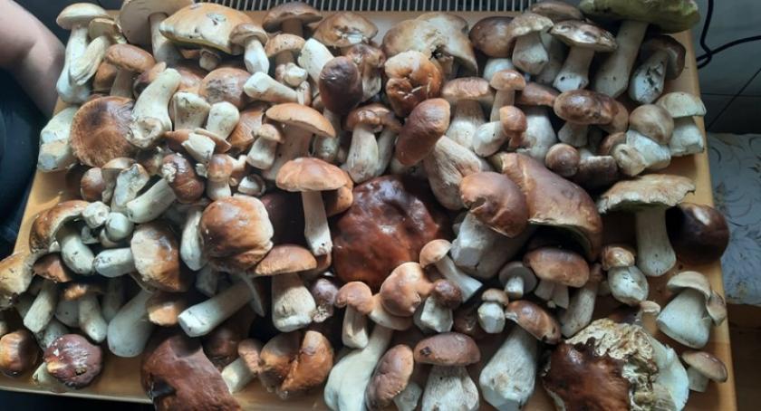 Leśnictwo i łowiectwo, Sezon grzybowy Mieszkańcy chwalą swoimi zdobyczami - zdjęcie, fotografia