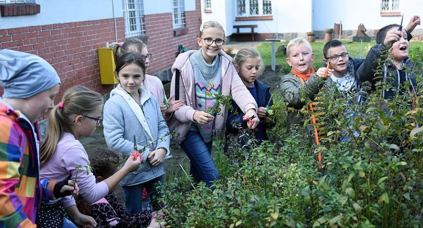 Rozmaitości, Jesienne porządki kaszubskim ogrodzie ciekawa akcja kartuskim muzeum - zdjęcie, fotografia