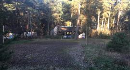 Teren po byłym campingu w Borowie zmieni się w plac rekreacyjny? Jest zgoda Lasów Państwowych