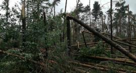 Właściciele lasów kontra powalone po nawałnicy drzewa. Walka z czasem trwa.