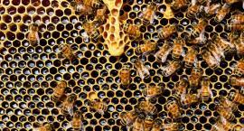 W powiecie grasuje złodziej uli - pszczelarze ostrzegają