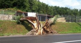 Powalone drzewa, uszkodzony dach i samochód - strażacy usuwali skutki nocnej burzy