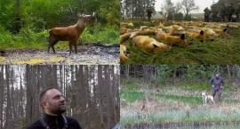 Kaszëbskô Prziroda cz. 2 - reportaż o kaszubskiej naturze - zobacz zwiastun