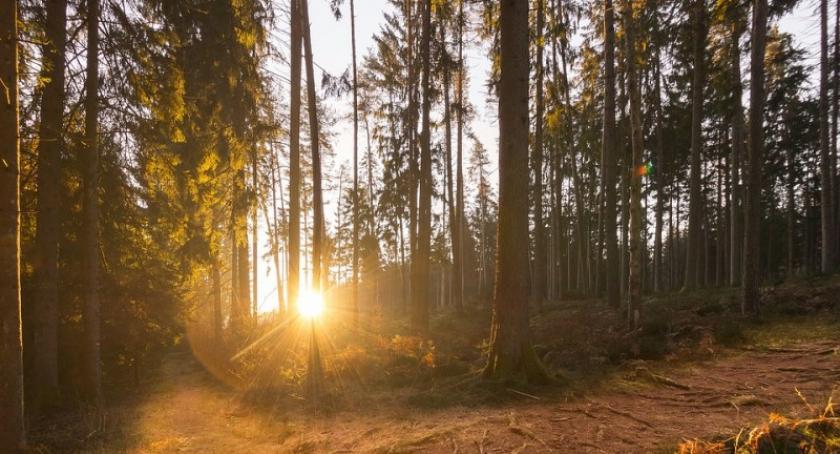 Leśnictwo i łowiectwo, Służba leśna ostrzega przed akcją tępienia szkodników drzew - zdjęcie, fotografia
