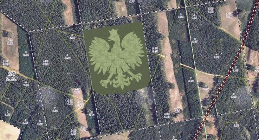 Uroczystości patriotyczne, Będą sadzić kształcie orła Niepodległej - zdjęcie, fotografia