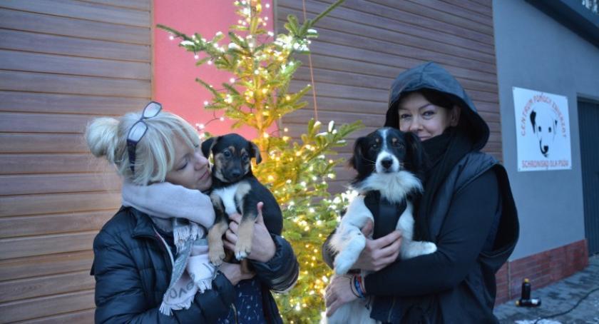 Organizacje pozarządowe, Święta czworonogów schroniska Animalsów Kościerzynie - zdjęcie, fotografia