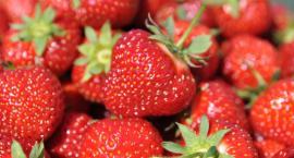 Mniejsze plony truskawek w tym roku - sprawdź, jakie są ceny