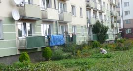Kościerzyna. Ogródki uprawne w centrum miasta