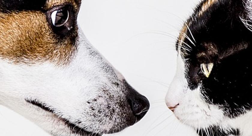 teatr, Cztery łapy czyli rzecz kotach psach Spotkania baśnią - zdjęcie, fotografia