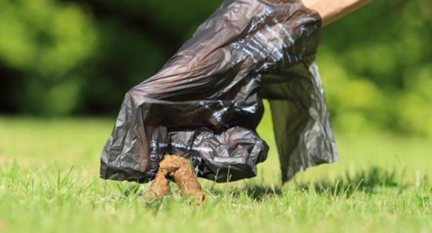 Gospodarka odpadami, Wiosenne porządki placu Baśniowym - zdjęcie, fotografia