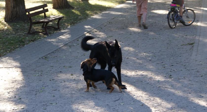 zwierzęta, Gdzie zaczipować swojego czworonoga - zdjęcie, fotografia