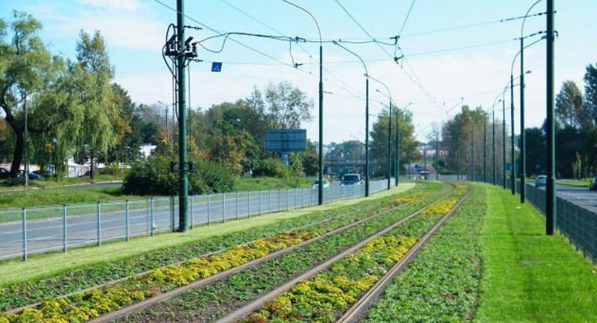 BP Stara Ochota, Zielone torowiska wzdłuż Filtrowej Nowowiejskiej eksperyment - zdjęcie, fotografia