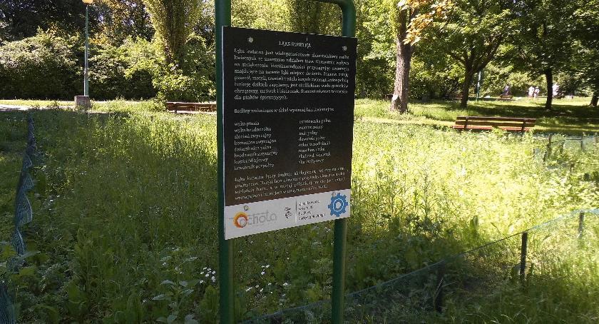 """budżet obywatelski, """"Kwietne łąki"""" - zdjęcie, fotografia"""