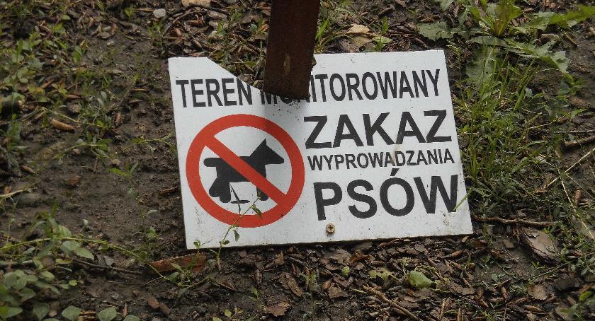 zwierzęta, Kamera straszakiem - zdjęcie, fotografia