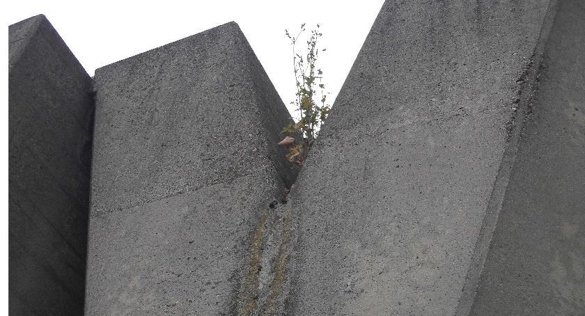 pomniki i ekspozycje, Pomnik Barykady Września tydzień przed świętem - zdjęcie, fotografia