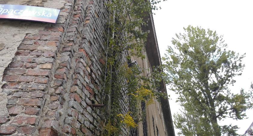 inwestycje, Opaczewskiej drzewa dalej rosną ścianie - zdjęcie, fotografia