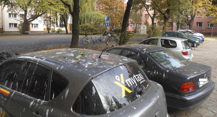 parkowanie, Partnerstwo przyrody motoryzacją - zdjęcie, fotografia