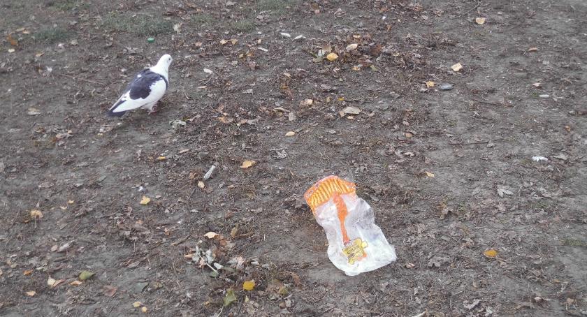 zwierzęta, dokarmiajmy ptaków torebkami foliowymi - zdjęcie, fotografia