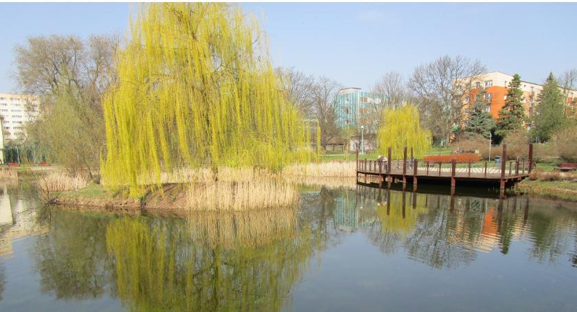 zieleń, Najbardziej lubię Malickiego - zdjęcie, fotografia