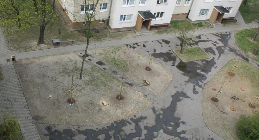 place i podwórka, jednak posadzili drzewa - zdjęcie, fotografia