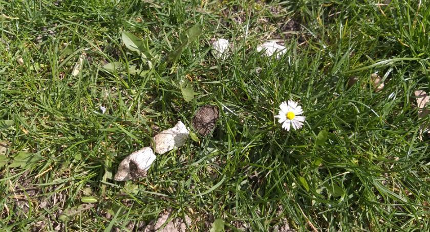 place i podwórka, Wiosna naszych podwórkach - zdjęcie, fotografia