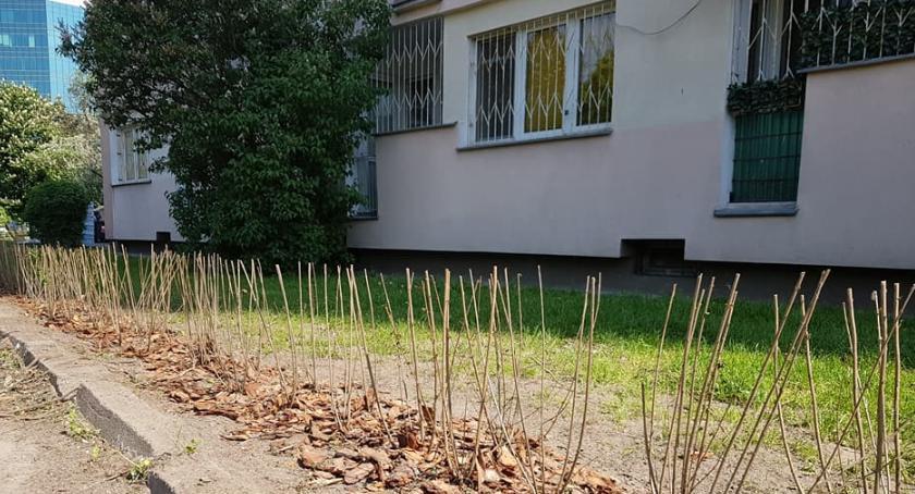zieleń, Sadzimy krzewy drzewa żywopłoty czyli Ochota zielone - zdjęcie, fotografia
