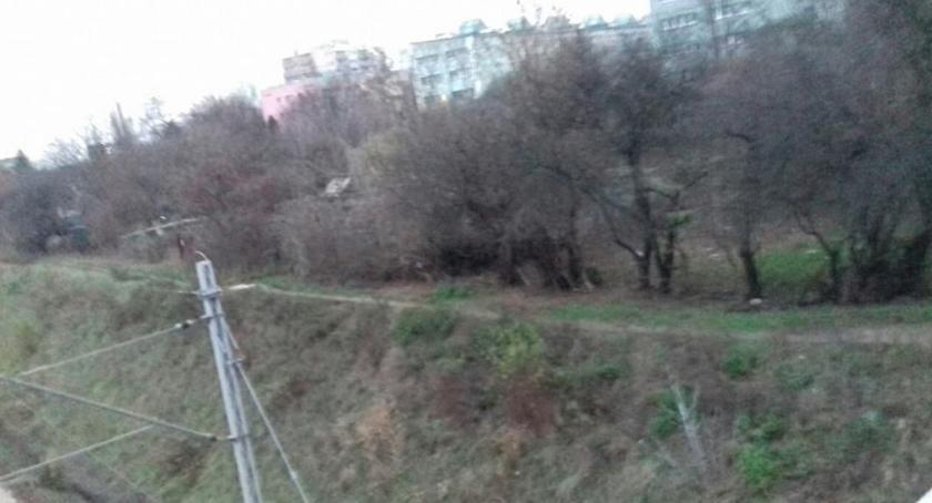 zieleń, zamiast działek - zdjęcie, fotografia