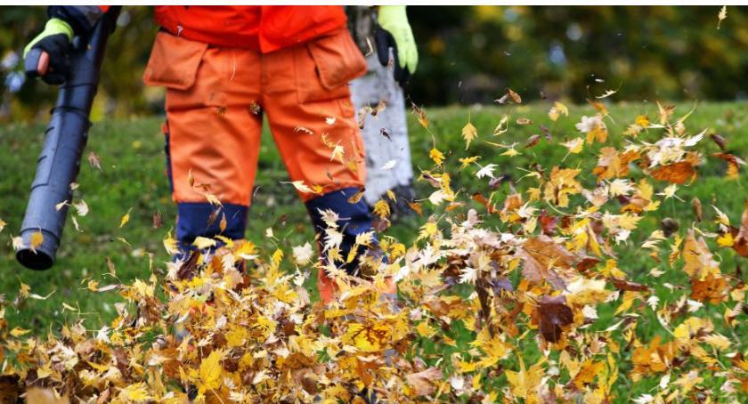 Gospodarka odpadami, Dmuchanie liście zakazane - zdjęcie, fotografia