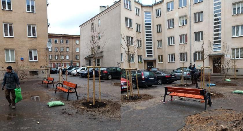zieleń, nasadzenia Częstochowskiej - zdjęcie, fotografia