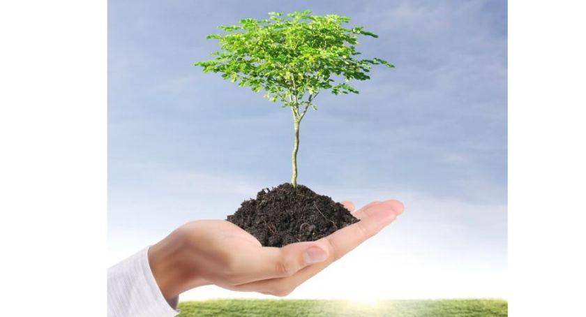 zieleń, Zgłoś drzewo zasadzenia! - zdjęcie, fotografia