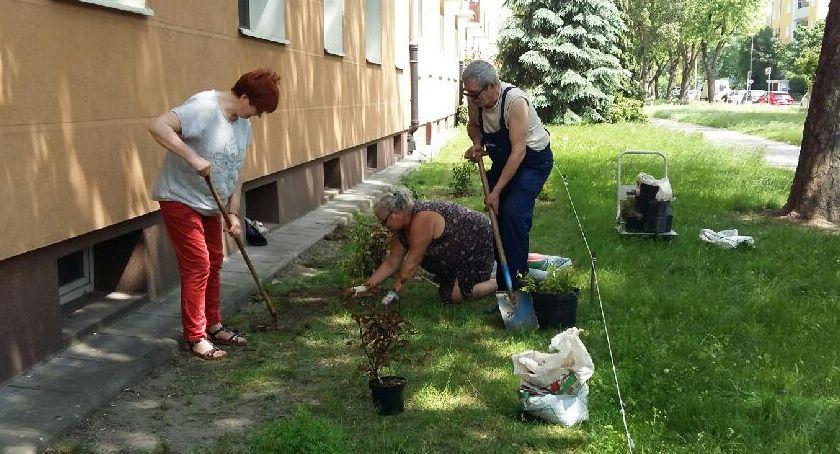 zieleń, Inicjatywa lokalna jednak można - zdjęcie, fotografia