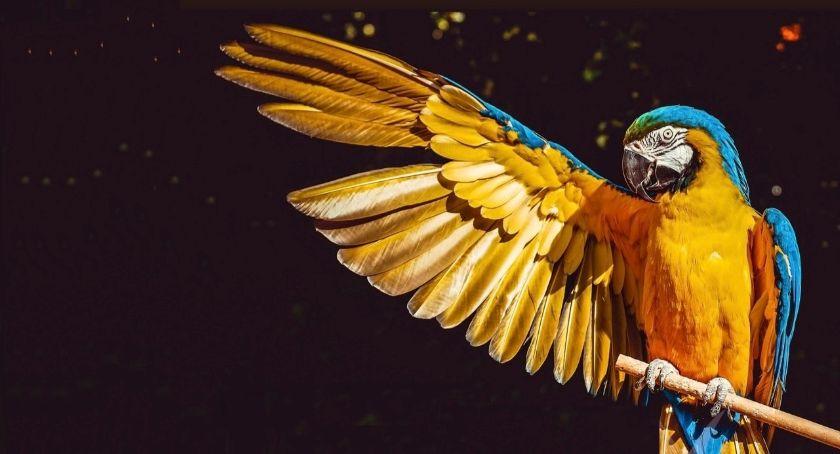 zwierzęta, Wystawa ptaków egzotycznych - zdjęcie, fotografia